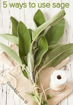 Growing your own sage plant at home is an easy and rewarding job that gives back with plenty of fresh sage leaves that you can use in your cooking and in the Sage Herb, Sage Plant, Plant Leaves, Spices And Herbs, Fresh Herbs, Dry Sage, Sage Uses, Sage Recipes, Raised Garden Bed Plans