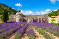 L'abbaye de Sénanque : une étape de #vacances en #Provence à ne pas manquer. #Blog #Belambra #Tourisme #France