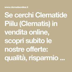 Se cerchi Clematide Piilu (Clematis) in vendita online, scopri subito le nostre offerte: qualità, risparmio e spedizioni gratuite.