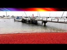 Red Alert From Haarp Status Network.com What Is Coming? Crabs By The Thousands On Southern California Beaches  Published on Jun 18, 2015 possible sign of earthquake activity.