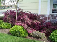 Outdoor Front Yard With Chinese Fringe Flower Plant