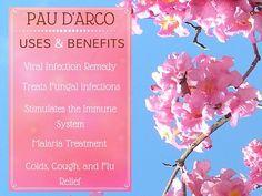 pau d'arco benefits