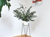 Podobny obraz Plants, Etsy, Plant, Planets