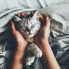 Pinterest: mia ☾  Kitty cat