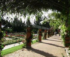 Rosas en floración en la Rosaleda en el Parque del Oeste de Madrid