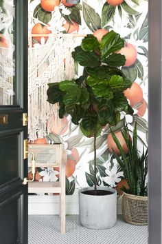 The Ultimate Guide to Fiddle Leaf Figs! Learn EVERYTHING you need to know to care for yours, including a picture guide to troubleshoot why yours is struggling! If you have (or want to have) a Fiddle Leaf Fig this guide is a MUST READ! Fiddle Leaf Fig Tree, Fiddle Fig, House Plant Care, Tree Shapes, Large Plants, Green Plants, Interior Plants, Garden Care, Indoor Plants
