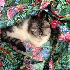 @capi_business Business Profile, Cats, Instagram Posts, Animals, Decor, Decoration, Gatos, Decorating, Animaux