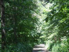 Warwick Forest Conservation Area, Berwick, Ontario