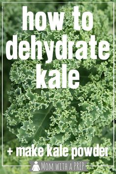 How to Dehydrate Kale for Making Kale Chips or Kale Powder - fabulous method to preserve kale well past the season!  // Mom with a PREP