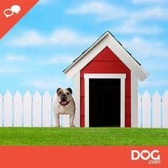 Do you kennel your dogs or leave them with family? Weigh in on the DOG.community!