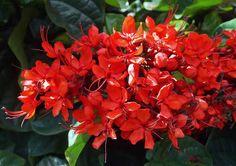 Orchid in pot Beautiful Flowers, Plants, Planting Flowers, Shrubs, Flowers, Landscape Design, Arboretum, Orchids, Garden
