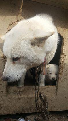Nami Kim team rescues from Bucheon dog farm - Korean Dogs