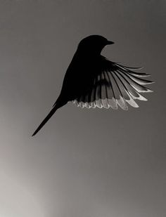 53 ideas bird black and white photography nature for 2019 - 53 ideas bird black. - 53 ideas bird black and white photography nature for 2019 – 53 ideas bird black and white photog - Monochrome Photography, Black And White Photography, Animal Photography, Amazing Photography, Nature Photography, Backlight Photography, Vogel Silhouette, Tier Fotos, Black And White Pictures
