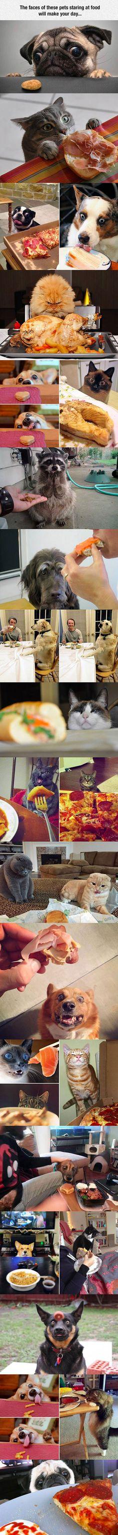 Pets staring at food...