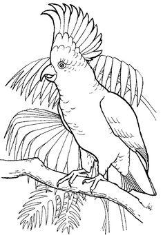 resultado de imagen de dibujos de cacatuas