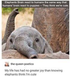 Elephants think we look cute !!!
