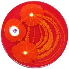 Petri Dish Paintings  www.klariart.com