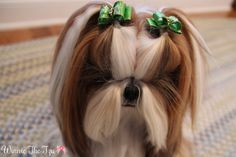 Lopsided piggies… Still cute! *#4 SL Specialty Dog BowsBrushing BeautiesLime w/tiny crystals from Doggie Bow Ties*
