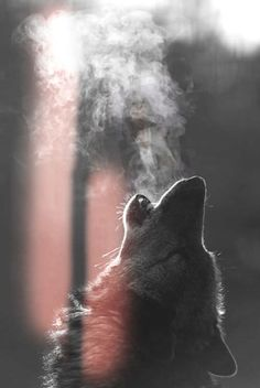 Find your inner wolf. at the great wolf lodge (I should be a advertiser) Wolf Love, Beautiful Creatures, Animals Beautiful, Tier Wolf, Animals And Pets, Cute Animals, Wild Animals, Wolf Wallpaper, Wolf Pictures