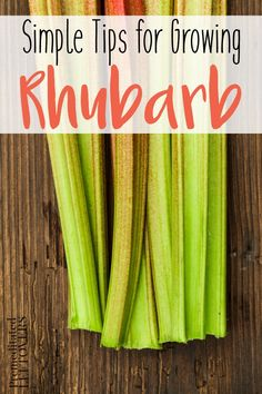 How to Grow Rhubarb in your garden- Tips for growing rhubarb, including how to plant rhubarb crowns, how to care for rhubarb plants, and how to harvest rhubarb plants.