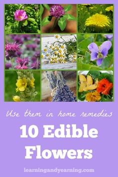 Herbal Remedies While not all flowers are edible, there are dozens which are. My focus here, though, is on edible flowers that are also amazing when used to make homemade herbal remedies. Home Remedies For Colds For Babies, Cold Home Remedies, Home Remedies For Hair, Natural Home Remedies, Herbal Remedies, Health Remedies, Holistic Remedies, All Flowers, Edible Flowers