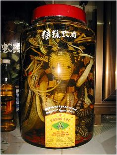 """Snake wine. Watch out, it has a bit of a """"bite""""...."""