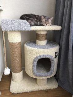 Cool Cat Trees, Diy Cat Tree, Cool Cats, Cat Exercise Wheel, Cat House Diy, Cat Playground, Cat Scratcher, Cat Room, Dog Crafts