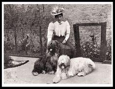 OLD-ENGLISH-SHEEPDOG-EDWARDIAN-LADY-AND-DOGS-VINTAGE-STYLE-DOG-PRINT-POSTER