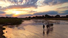 An Insider's Guide to Walking in The South Luangwa. #Travel #Africa #safari #walking #BucketList