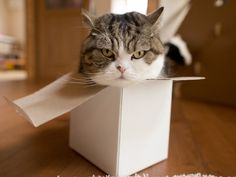 Maru:[Of course, I'm in the box!] | 5/31, 2016 | 4-1 | via 私信 まるです。(Maru videos are hilarious, check out youtube)