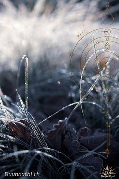 """Jedes Mal, wenn die letzten Tage eines Jahres anbrechen, beginnt für mich eine ganz besondere Zeit.  Wahrscheinlich denkst du jetzt an Weihnachten, Tannenbäume, Christbaumkugeln, Adventskränze, süss duftende Plätzchen, Familientreffen und Geschenke.  Ich freue mich auf Weihrauch, Nebel, Rituale, Zeit für mich, Stille, Reflexion, Magie, bewusstes Loslassen, Wünsche und Visionen, ein bewusstes """"in meine Kraft kommen"""".  #rauhnacht #rauhnächte #magie #herzbauchwerk #weihnachten #jahreswechsel Dandelion, Impulse, Happy, Plants, Healthy Living, Happiness, Sensitive People, Highly Sensitive Person, Mists"""