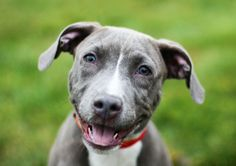 Dogs need to play in order to be well adjusted and happy, they need a KONG Mans Best Friend, Best Friends, Kong Dog Toys, Dog Kennels, Crocodile, Happy Life, Your Pet, Beds, Pitbulls
