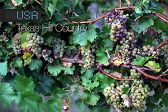 Wine Enthusiast has named the Texas Hill Country one of the Top Wine Travel Destination of 2014! Everything really is bigger in Texas: It's the No. 5 wine-producing state in the U.S., the Texas Hill Country AVA is the second largest in the nation and its most promising wines boast supersized flavors.