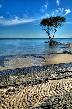 Fraser Island, Australia via Flickr