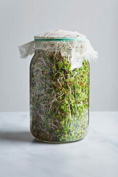 A simple step-by-step guide for how to grow sprouts in a jar. Growing sprouts in a jar is easy, affordable, and super gratifying! Growing Sprouts, Growing Microgreens, How To Grow Sprouts, How To Sprout Seeds, Alfalfa Seed, Alfalfa Sprouts, Growing Greens, Growing Plants, Container Gardening