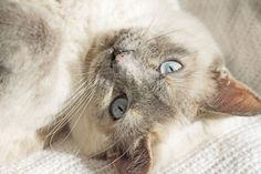 Cat Photography Animal Photography Pet Photography by Fotograffa