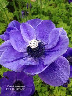 Purple flower halo diamond ring.