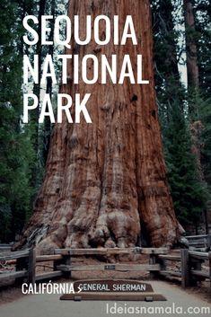 Nesse post contarei um pouco do passeio destacando meus pontos preferidos como a Rodovia dos Generais, os Generais Sherman & Grant, Morro Rock e tudo o que você precisa saber para organizar sua viagem para o Sequoias National Park.