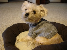 cabled dog sweater pattern @Gerda Porter