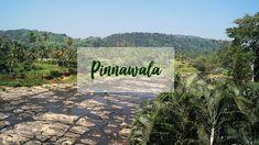 A day trip to beautiful Pinnawalla in Sri Lanka //VoyageCompass