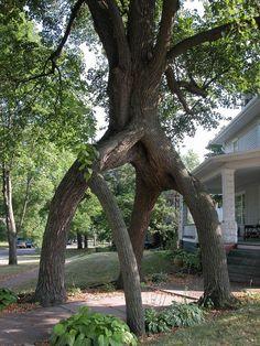 Amazing Tree #trees, #nature, #bestofpinterest, fa...