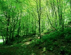 Sigillo (PG) • Parco del Monte Cucco   Monte Cucco Park   #AltaUmbria #Umbria