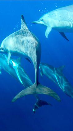 BikramHOtYOga ja seikkailuja delfiinien kanssa… Hawaii <3