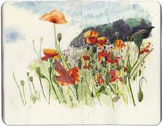 Wildflower meadow by Wil Freeborn, via Flickr