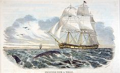 """20 November 1820, a giant sperm whale sank the Nantucket whaler """"Essex"""" 2,000 miles west of South America, an incident that formed the background of Herman Melville's tale of """"Moby Dick; or The Whale"""", published 30 years later."""