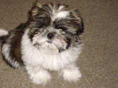 My little angel when he was a puppy.