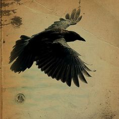 Raven Black Bird - Square Steampunk Halloween Wood Gold Rustic Wings. $11.88, via Etsy.