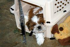 Notre produit : Comment empêcher votre chien d'aller au toilette dans la cage  Catégorie : post  Description :  Si vous partagez votre maison avec un animal de compagnie, il y a de fortes chances que vous ayez eu à faire face à un ou deux (ou deux douzaines) accidents de toilette. Cela comprend les accidents occasionnels de pisse en caisse. Pour la plupart des propriétaires de chiens, c'est un petit prix à payer pour l'amour inconditionnel que les chiens apportent à nos vies. Cependant, si…