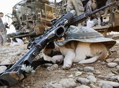 A puppy in a war zone