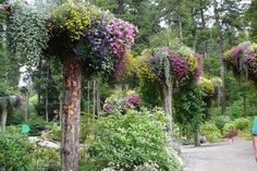 Glacier Gardens. Alaska.